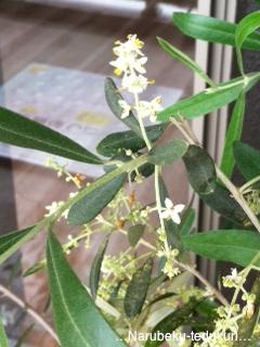 olive1.png